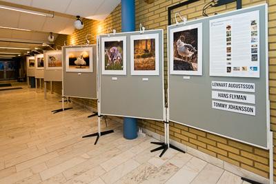 Fotoutställning under Arvika Fotofestival tillsammans med Lennart Augustsson och Tommy Johansson